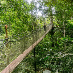 Canopy Bridge Taman Negara National Park