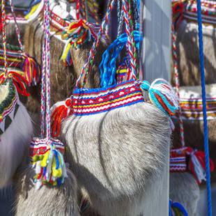 Sami souvenir