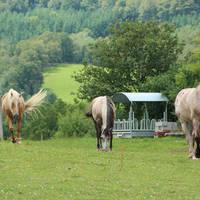 Omgeving met paarden