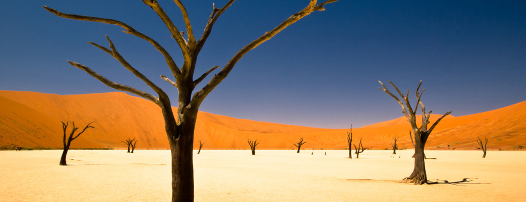 Sossusvlei-Dry-Trees-Wallpapers