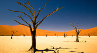 Sossusvlei-Dry-Trees-Wallpapers