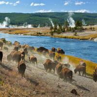 Amerika: Yellowstone National Park