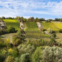 Wijngaarden langs de Romantische Strasse