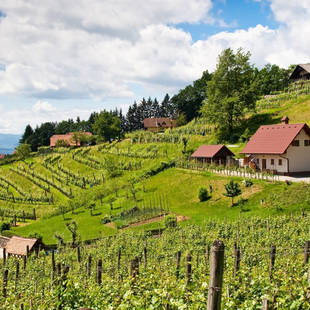 slovenie_algemeen_heuvels_wijngaarden_3_20141118102320197