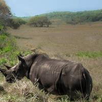 half-day-hluhluwe-umfolozi-game-reserve-safari