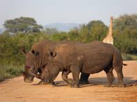 Zuid-Afrika - Hluhluwe - Rhino Ridge