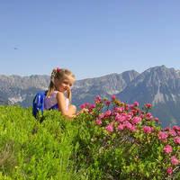 WK_028_Alpine-roses-Hartkaiser_TVB-Wilder-Kaiser