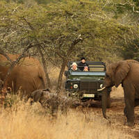 Game Drive bij Leopard Mountain Lodge