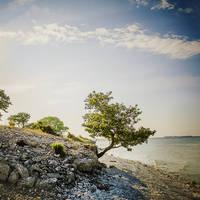 Gotland natuur - Foto: Simon Paulin