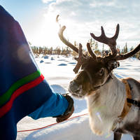 Sami met rendier - Foto: Lola Akinmade Åkerström / Visit Sweden