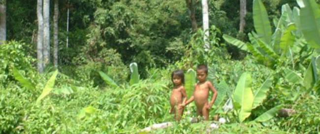 Kubu stam