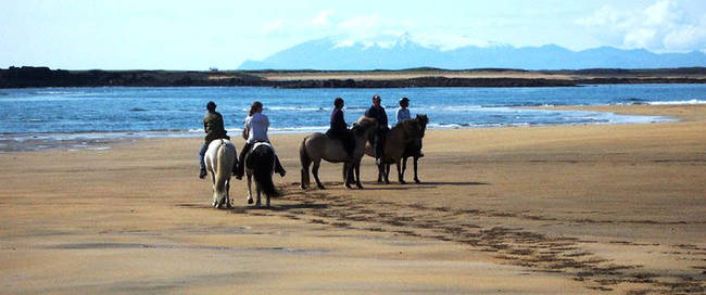 Snaefellsness Paarden