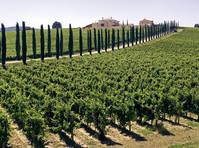 Wijngaard Umbrië