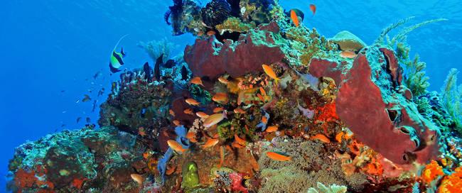 Onderwaterwereld Komodo