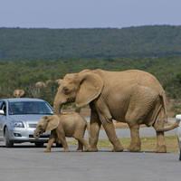 spot-elephants-at-addo-national-park-photo-johannes-van-niekerk