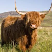 Highlander op Isle of Skye