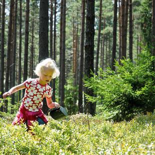 Bessen plukken - Foto: Måns Fornander