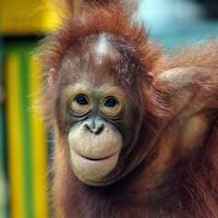 23 daagse groepsrondreis inclusief vliegreis Fascinerend Indonesië