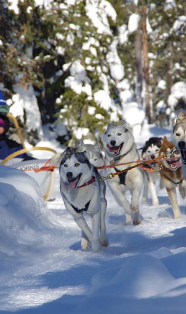 8-daags winteravontuur Husky- en Sneeuwavontuur Salla thumbnail