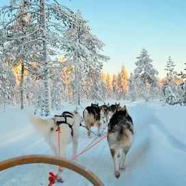Winterbelevenis