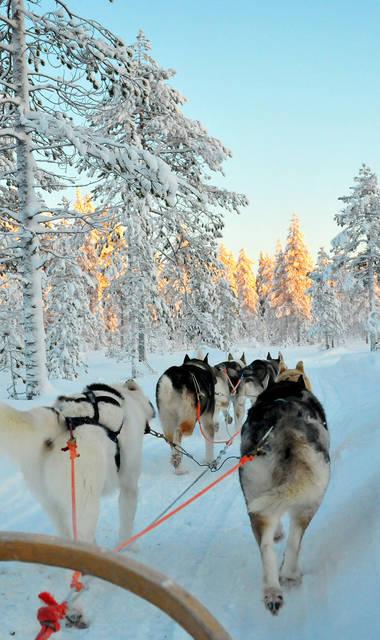 8-daags winteravontuur Fins Lapland
