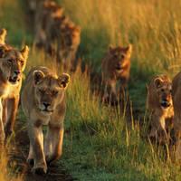 Zuid-Afrika - Pungwe Safari Camp