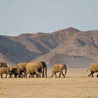 desert-elephants-damaraland-namibia