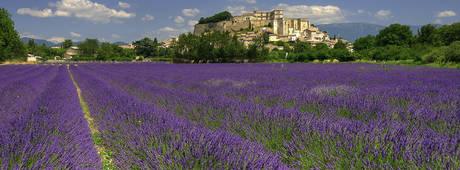 Vakantie Provence Frankrijk - Lavendel velden