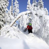 Sneeuwzeker