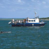 Boottocht met dolfijnen