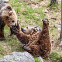Ranua Wildlife Park - Foto: Marko Junttila / Visit Finland