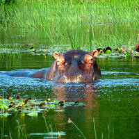 10-daagse prive rondreis - exclusief vliegreis en autohuur Big 5 & Hippo's