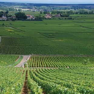 Napa Valley wijnlanden
