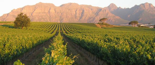Zuid-Afrika - Stellenbosch - De Zalze Lodge