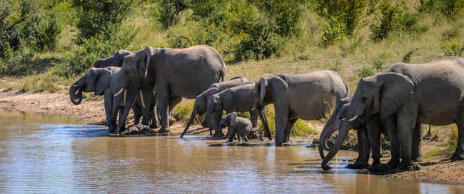 Olifanten bij waterplaats, Addo Elephant National Park
