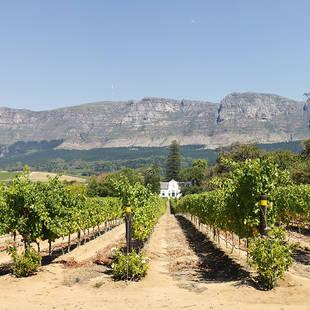 wijnlanden bij Kaapstad