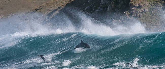 dolphin coast3