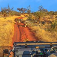 Game drive safari met ranger in het Krugerpark