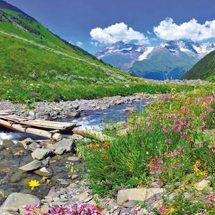 Alpentoppers Tirol