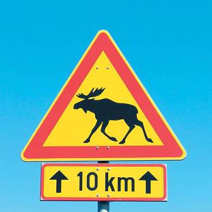 Verkeersbord rendier 10 km