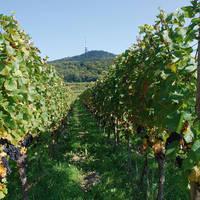 Wijnbergen