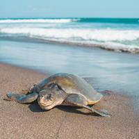 Schildpad op het strand