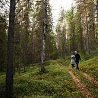 Wandeling door de bossen