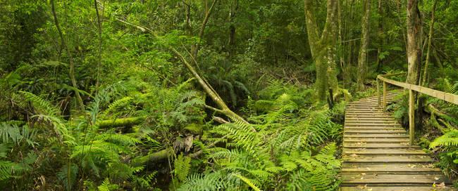 Wandelroute door het regenwoud - Tsitsikamma National Park