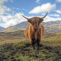 12 daagse fly drive Schotse Hooglanden