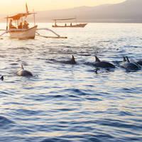Dolfijnen Lovina