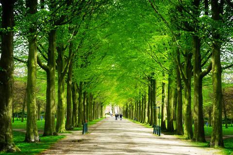 Goedkope vakantie Zuid-Holland 🚗️Hotel Andante