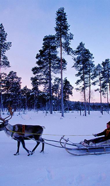 8-daagse vlieg-busrondreis Dwars door Lapland