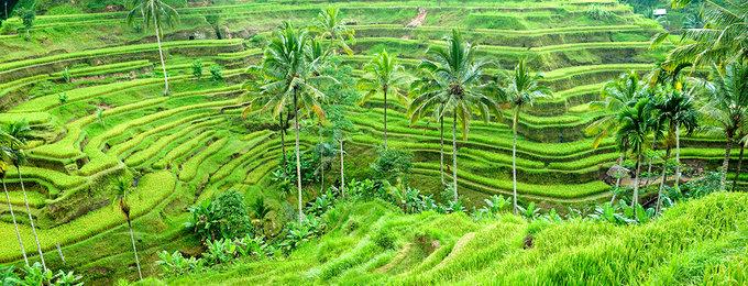 Verre Reizen Indonesië
