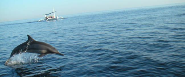 Dolfijnentour Lovina